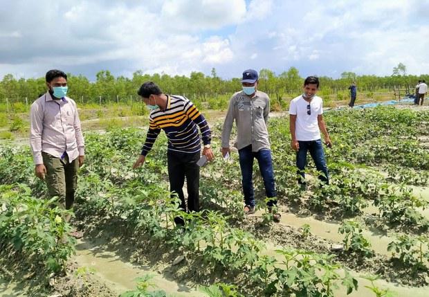 200908-BD-Rohingya-BhashanChar-field1000