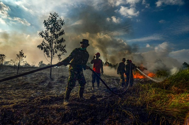 Indonesian Activists: New Rules on Palm Oil Plantations Could Threaten Forests' Survival