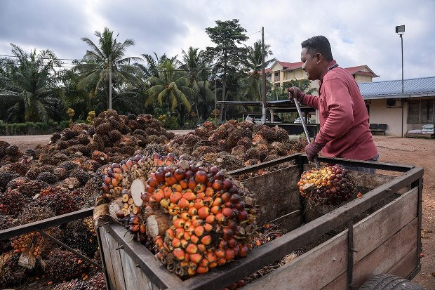 US Blocks Imports From Malaysian Palm Oil Giant Over Alleged Forced Labor